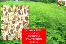 Moringa Seeds PKM 1 Elite Non-GMO for Germination/cultivation/sowing