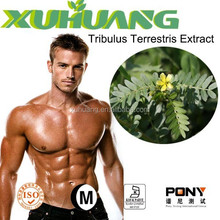 China's best-selling male health products high quality Tribulus Terrestris Extract Powder