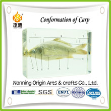 Conformation of carp for educational equipment
