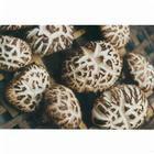 Dried Shiitake mushroom for good sales