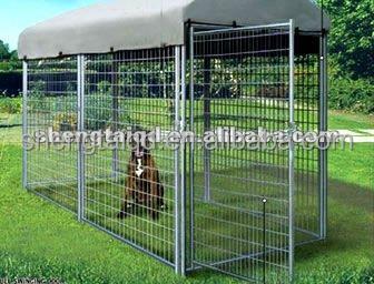 سلسلة الحيوان وصلة، وبيوت الكلاب الأليفة الكلب البعيد
