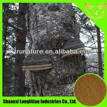 Herbal products wholesalers Supply Chaga Extract/Inonotus obliquus Extract