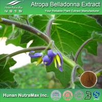 1%~3% Scopolamine Extract,Scopolamine Extract Powder,Scopolamine Belladonna Herb P.E.