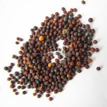 De alta qualidade qing cai zhong zi greengrocery sementes