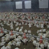 Automatic poultry closed house system chicken broiler farm equipment