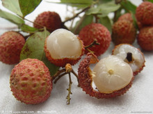 GMP factory Natural food grade semen litchi extract powder lychee seed extract