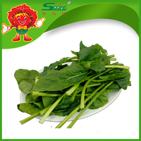 Bulk Frozen Vegetables Seasoned Spinach organic green food