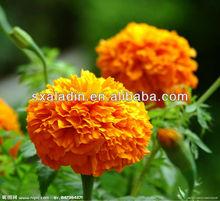 Top quality Marigold P.E.