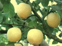 Best Price fresh pear New crop ya pear/sweet pear