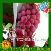 fresh grapes/fresh fruit grapes 2015 earlier crop lowest price export