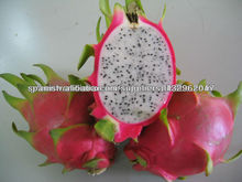 FRESH AND FROZEN DRAGON FRUITS