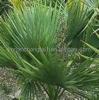 Factory direct supply Hot sale best price sabal palmetto