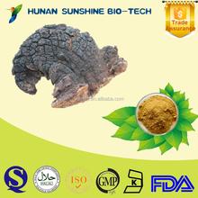 Alibaba China treat diabetic product Inonotus obliquus extract 10%-50% Polysaccharides