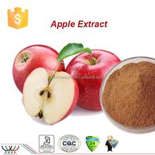 apple extract powder,free sample for trial HACCP FDA Kosher apple peel extract,80% polyphenol,95% phlorizin apple extract powder