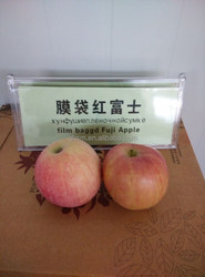 Price for chinese fresh fuji apple fruit