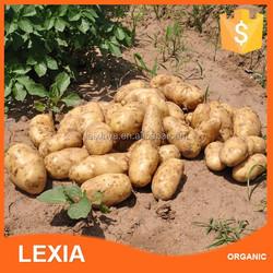 Fresh Potatoes wholesale China