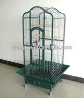 GL-06 price pet birds