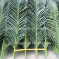 de coco preseverd hojas de los árboles