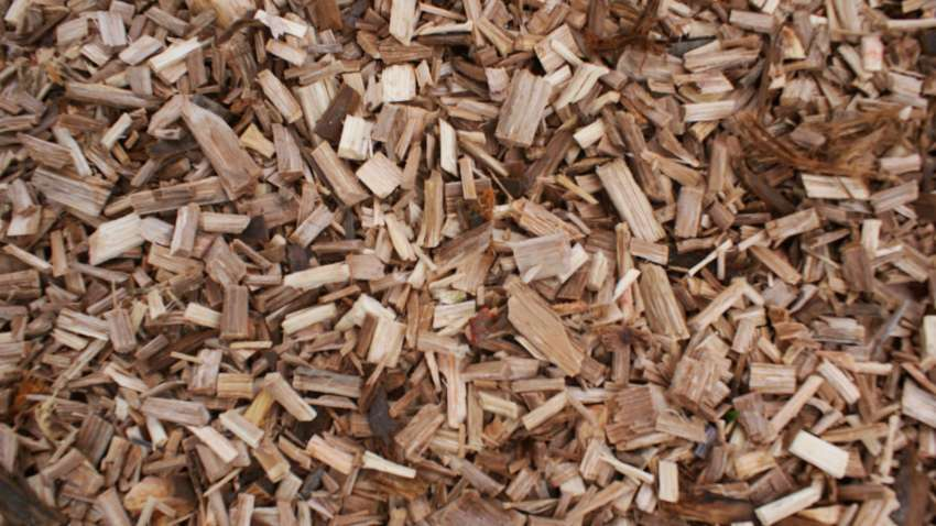 Biomass Wood Chips ~ Pine wood chip biomass buy woodchip