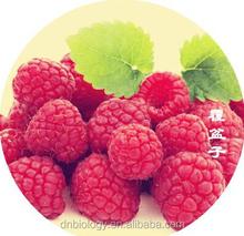 Top Quality Raspberry Extract 4:1~20:1 health food plant extract Raspberry extract/Rubus idaeus L/Raspberry Ketone