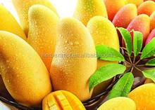 Natural mango seed extract 4:1 10:1 20:1,mango seed extract powder