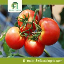 fresh green bag tomato extract