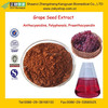 GMP Manufacturer Supply Water Soluble Grape Seed Extract