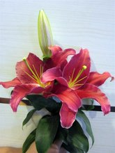 Lily Arabian Red