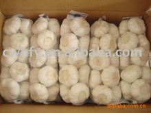 2012 white fresh garlic