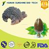 Best quality of Chaga mushroom P.E. powder HPLC 1%-10% Triterpene