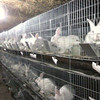 Galvanized Pet Cage For Rabbit For Sale