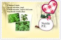 High quality Nettle p.e.