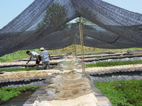 Recycle Hdpe shade Netting/Shade Cloth/Shade fabric
