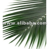 Sun dried palm leaves,