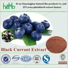 Natural Black Currant Extract powder with Anthocyanin 25% UV
