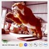 Life Size Animatronic Animals