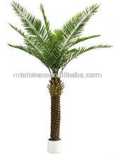 date palm trees/date palm/bonsai plant sale