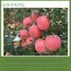 Wholesale Prices Apple Fruit Fuji Red Apple in Yantai