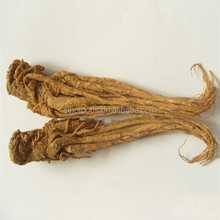 dry angelica root radix angelica sinensis