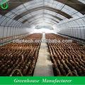 Anti- em túnel de vento de cogumelos com efeito de estufa
