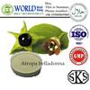 2015 new Atropa Belladonna Extract (Total Alkaloid, 1% Atropine)