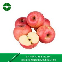 export red Fuji Apple high quality