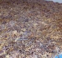 Seaweed Eucheuma Cottonii Origin Sulawesi