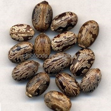 buy bulk castor bean seed