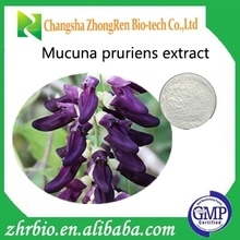 Plant extract mucuna pruriens extract 98% 99% l-dopa