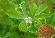 Highly concentrated 100% new coming fenugreek seeds extract total saponins