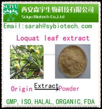Loquat leaf extract/Loquat extract/Ursolic acid 25-45%