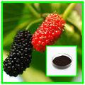 Com 5%- 25% antocianinas mulberry extrato de fruta