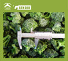 Frozen broccoli uk frozen food limited uk frozen food limited