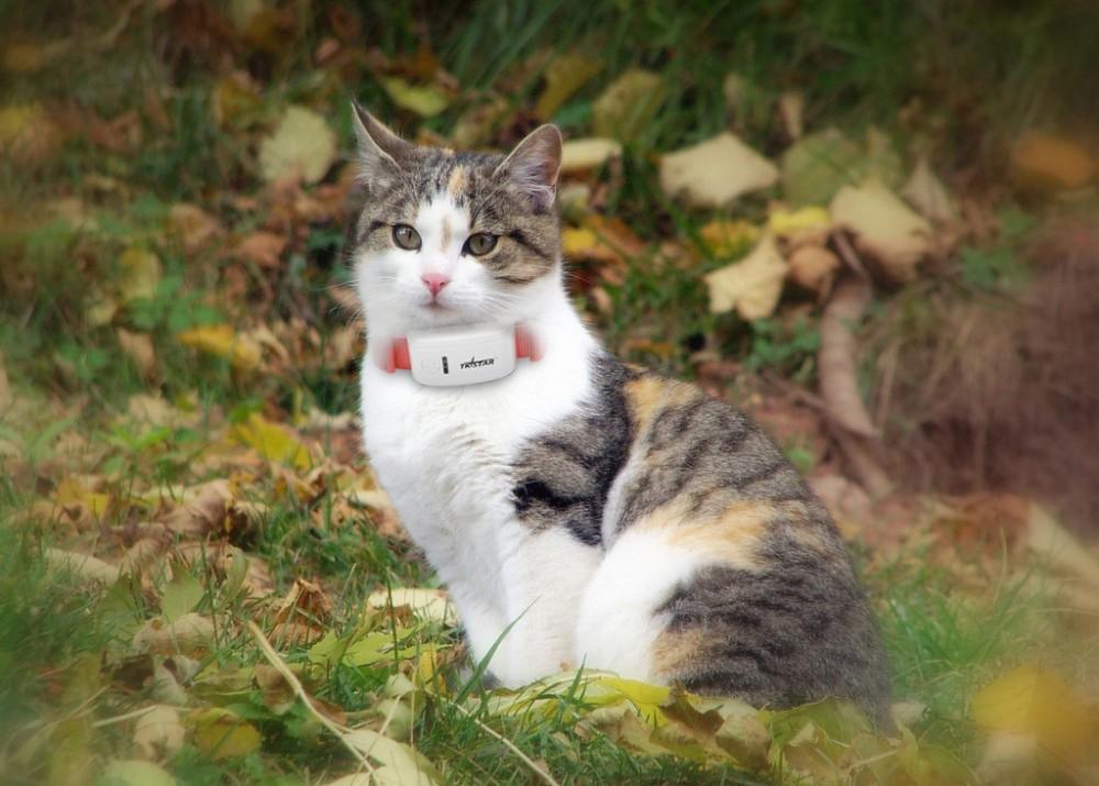 GPS TK909 pet tracker-Chien/Chat Collier Pièce Jointe pour animaux de compagnie personnels mini gps dispositif